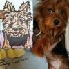 HeartFULL Pet Portraits