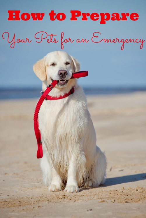 How to Prepare Your Pets for an Emergency