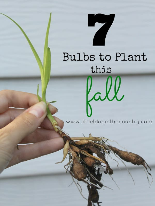 Flowers to Plant in the Fall